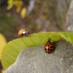 """""""Ladybugs"""" © 2010 Mandy Boyle"""