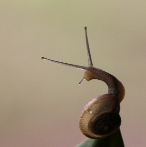 This snail most definitely looks balanced.
